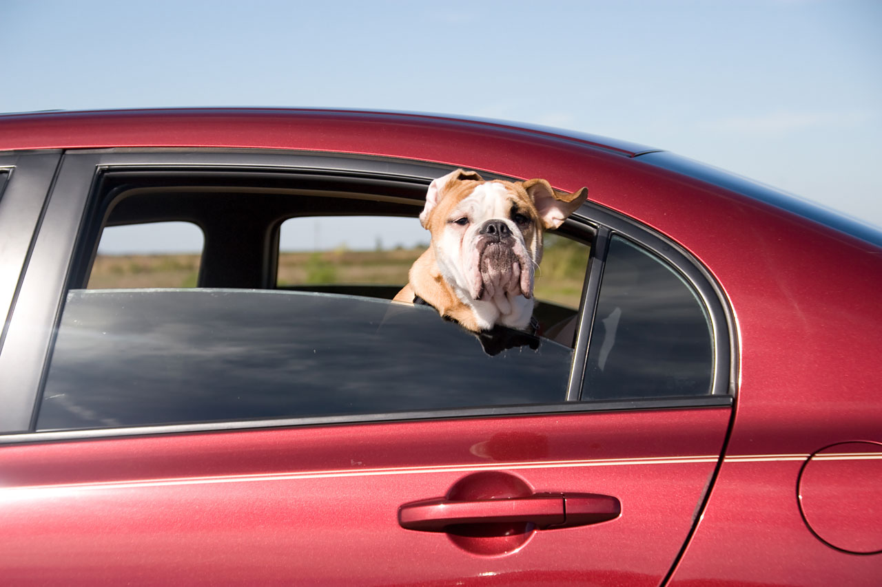 dog-in-car-1280x853